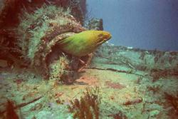 Friendly eel in the reef