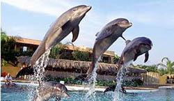 Happy Trio @ Dolphins Vallarta