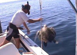 Releasing Turtle from towline